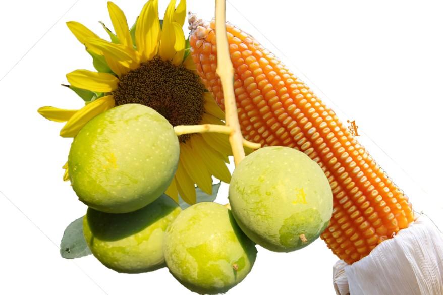 Vegetable oil not from Vegetables