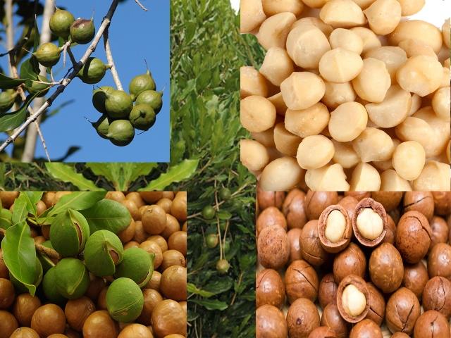 macadamia nuts (640x480)