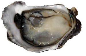 Oysters are rich in Zink