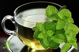 Spearmint is effective in helping to reduce body fat