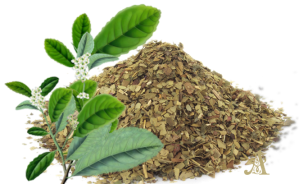 Yerba Mate- effective stimulant that gives energy and increases metabolism