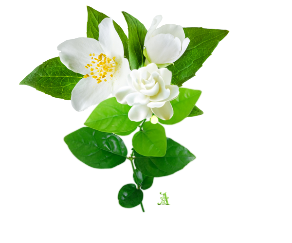 Jasmine flowers will blossom at night and release a scent that has shown to promote more restful sleep